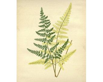 Vintage Botanical Floral Leaf/Greens Series Plate 4 Digital Download: 8x10, specimens, vntage-look, printing and framing, decoupage