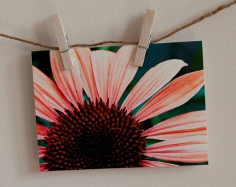 "Greeting Cards Blank Thinking of You ""Coral Summer Echinacea"""