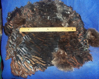 real animal taxidermy bird feather bronze turkey back part