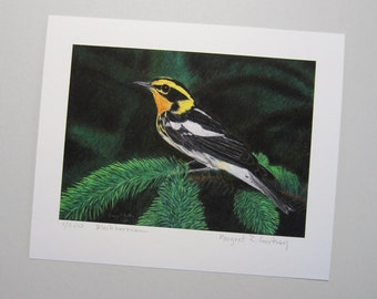 Print Limited Edition Giclee - Blackburnian Warbler