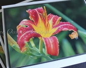 Vibrant Star Lilly Greeting Card