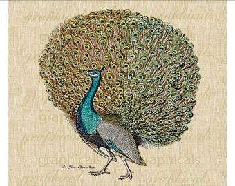 Peacock digital download image print peacock full feather teal yellow for fabric transfer decoupage paper burlap pillows tote bags No. 499