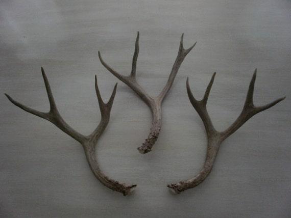 Three beautiful natural deer antlers design decor lamps crafts art centerpiece gift