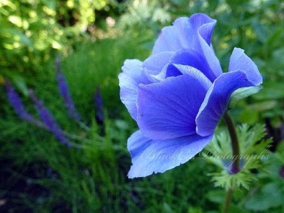 Romantic Floral Print, Spring Garden Art, flower fine art photography, periwinkle blue lime green,  5x7 print, feminine decor, for her