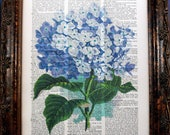 Purple Hydrangea Art Print on Vintage Dictionary Book Page
