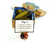 Diatom Catnip Cat Toys Gift Box