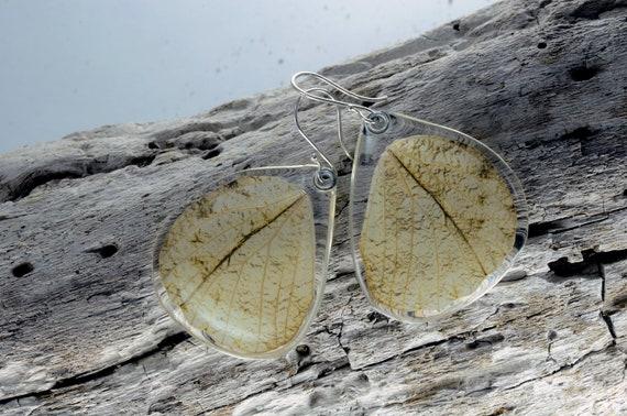 Real butterfly wing earrings (Hebomoia Glaucippe) bottom wings
