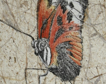 HELICONIUS, butterfly, original zinc plate etching
