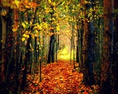 "11x14"" The Less Traveled Path Fine Art Print Forest Autumn Fall Trail"