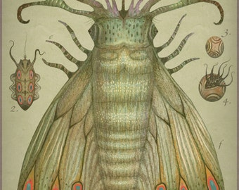 Cephalopodoptera tab IV - Art print