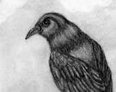 Black Crow Drawing - Original Pencil Drawing - Bird Sketch - Halloween Decor