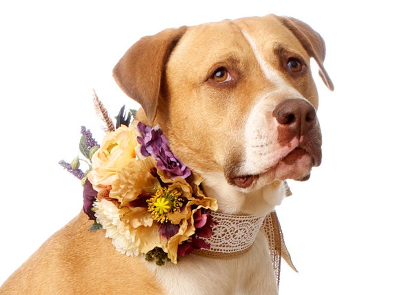 Items Similar To Country Western Wedding Corsage For Dogs