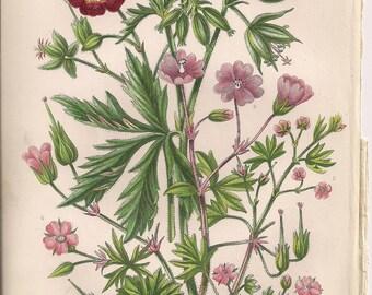 Original Victorian Chromolithograph Floral Picture print c.1900 - Cranes Bill