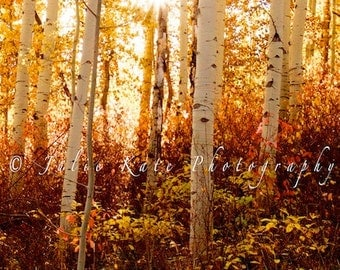"20"" x 30"" Print on Canvas, Colorado Aspen Trees in The Fall, Fine Art Print - ""Shining Gold"""