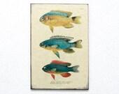 "Retro Wood Wall Art 8x12"" 20x30 cm, Fish Educational Board, Natural History, Wall Hanger, Art Deco Room Decor, Nautical, Nursery room art"
