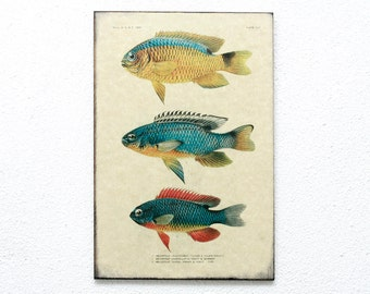 "Retro Wood Wall Art 8x12"" 20x30 cm, Fish Educational Board, Natural History, Wall Hanger, Art Deco Room Decor, Nautical, Nursery room art"