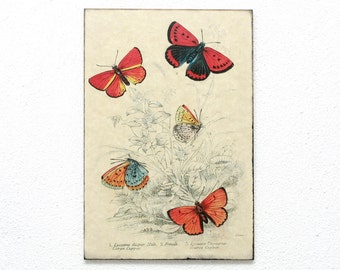 "Butterfly Retro Wood Wall Art 8x12"" 20x30 cm, Educational Board, Natural History, Wall Hanger, Art Deco, Room Decor, Shabby, Nursery room"