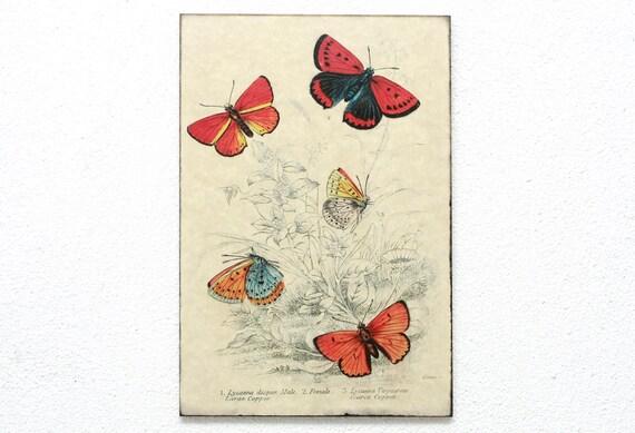 "Butterfly Retro Wood Wall Art 8x12"" 20x30 cm, Educational Board, Natural History, Wall Hanger, Art Deco, Room Decor, Shabby, Nursery room"