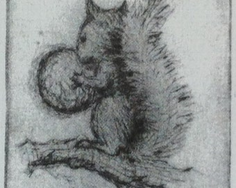 Squirrel       A Drypoint Etching