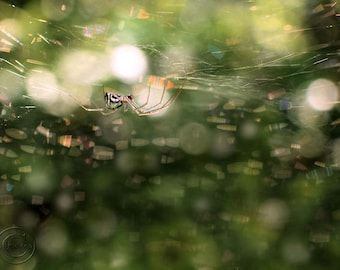 Spider in Web Fine Art Nature Photography, Golden Garden Spider, In the Forest, Spider Photography, Green, Bokeh, Nature