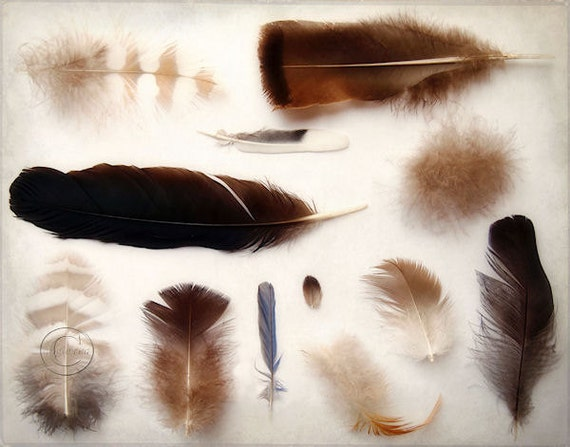 "Feathers 11"" X 14"" Print, Fine Art Photography, Feather Collection, Feather Print"