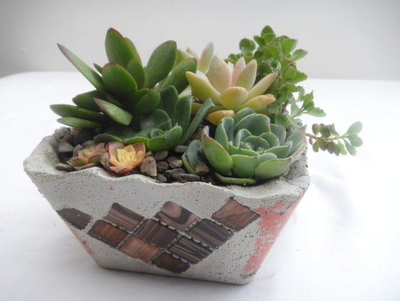 Creative rustic succulent living arrangement by RotdCreations