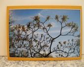 Tree Card, Cox Arboretum Ohio, Blank, All Occasion, Original Photography