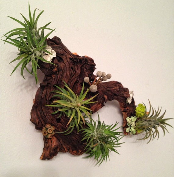 Air Plants and Moss Wall Garden - Living Wall Art - A Unique Birthday or Housewarming Gift Idea