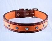 """Leather Dog Collar Medium Couture Orange 1"""" Wide"""