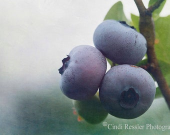 Blueberries 1, Fine Art Photography, Food Photography
