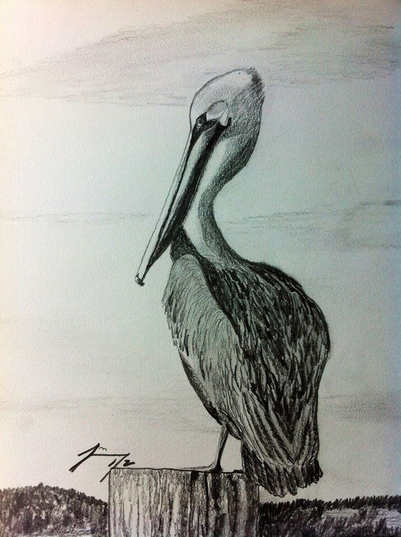 Coastal Pelican Framed Original Pencil Drawing