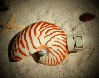 Natural Nautilus Shell Nitelite