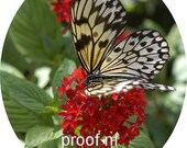 The Wandering Butterfly Photograph