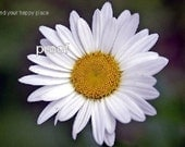 The Magnificent Daisy Photograph