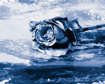 Blue Rose photo Digital Download Painterly Rose Fine Art Photography print wall art