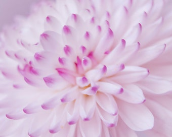 Pastel Flower photograph Digital Download  Nursery Art Girls Room Printable art children lavender floral white blossom print