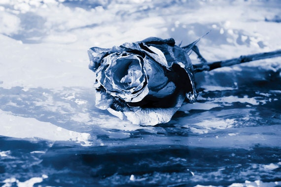Blue Rose photo Digital Download Painterly Rose Fine Art Photography print wall art