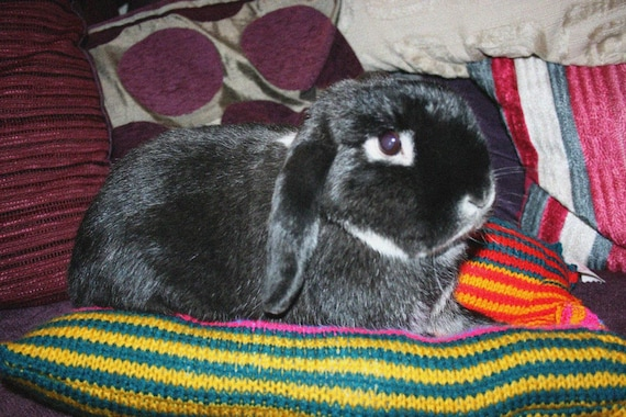 Bunny Hugger side by side bunny bed for a small rabbit hand knitted bright stripes