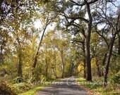Sunlit Drive - 8x10 Color Print Nature Autumn Fine Art Photography - Other Sizes Avalable