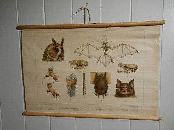 Vintage School Chart of Various Flying Creatures