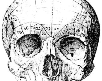 The human skull, real skull, Human Anatomy, Old medical atlas illustration Digital Image, 35