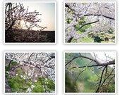 Nature Photograph Set - Blossom, Tree, Abstract, Fine Art 8x8 or 8x10 Set