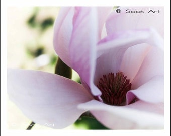 Pale Pink Flower Photo, Pink Magnolia Fine Art Print, 8x10, Macro Nature Photography, Botanical Print