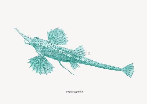 Longtail Seamoth  Fish Print Cottage Decor Pegasus volitans