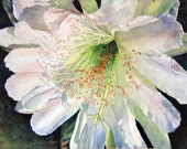 ACEO Fine Art Print / From a Watercolor / Of a Night-Blooming Cereus Cactus / Size 2.5x3.5 inches