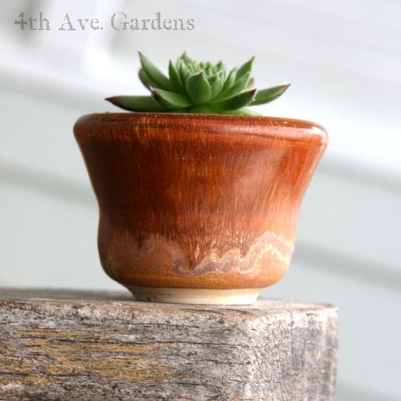 Madeline - An Impassioned Succulent In One-of-a-Kind Mini Hand Thrown Planter