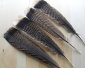 Wild Turkey Tail Feather Selection