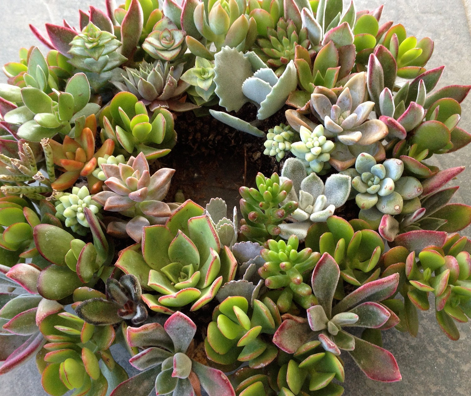Mother's Day Living Succulent Centerpiece Or Hanging