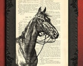 Horse art print on dictionary page equestrian decor horse illustration book page beautiful gift for horse lover
