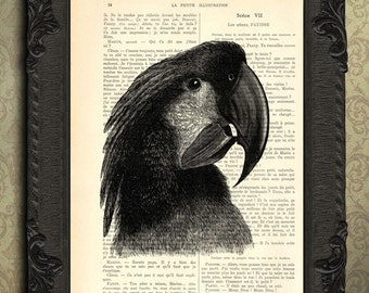 cockatoo print tropical bird art print black and white parrot print